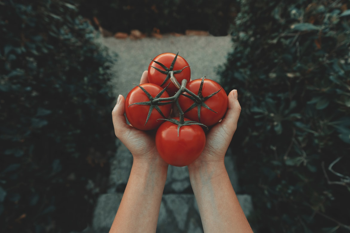 Which Tomato Is Best For Salad - a photo of tomato
