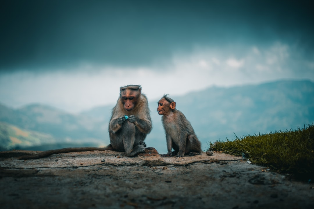 Monkey and her baby .captured this shot in the beautiful hill top of kodaikanal.