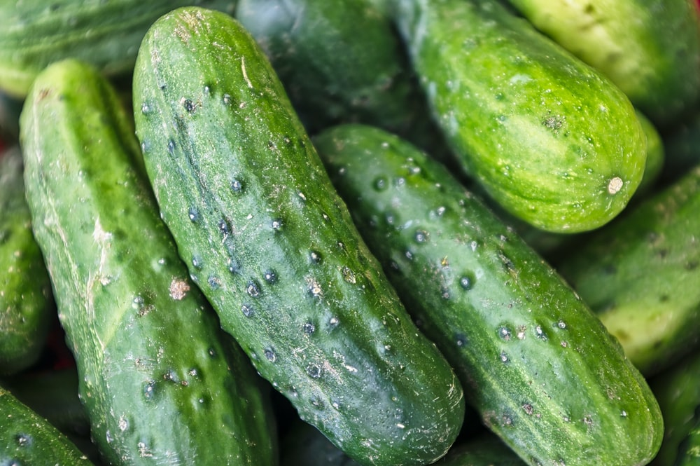 green cucumber lot