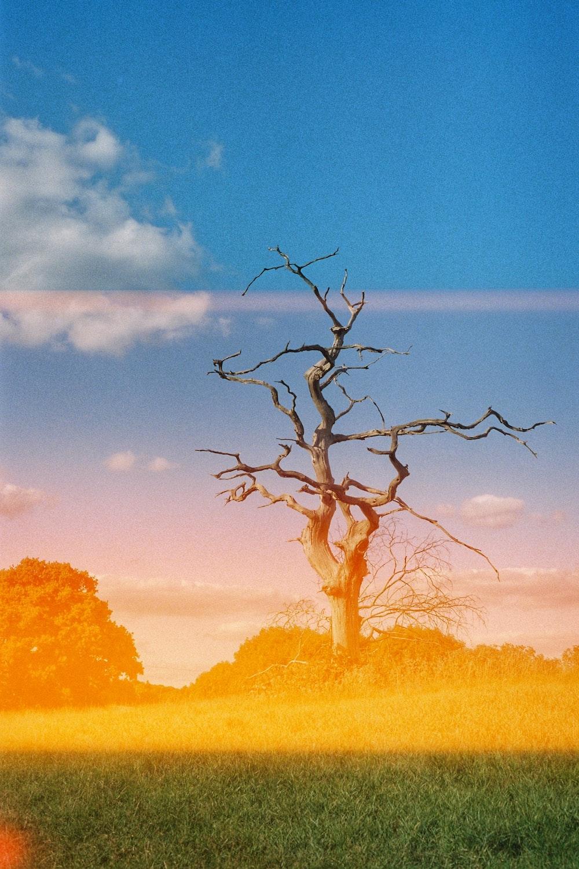 brown leafless tree on grassland photo