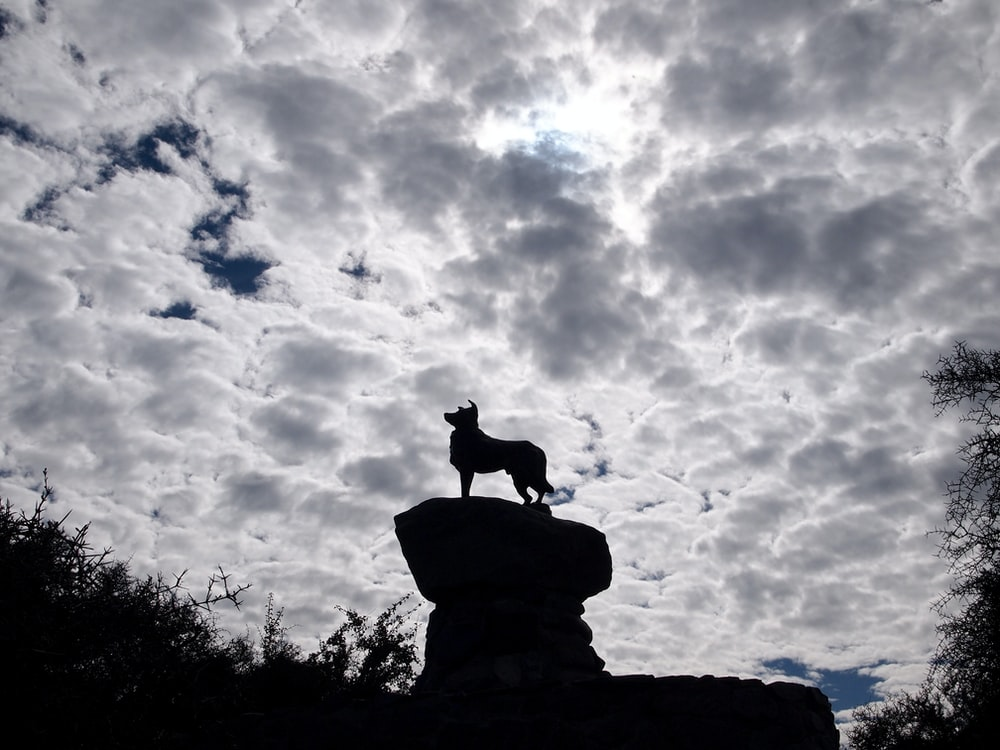 silhouette of dog standing on rock