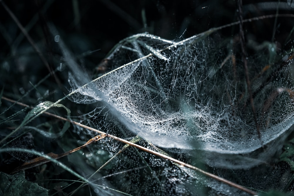 macro photography of cobweb