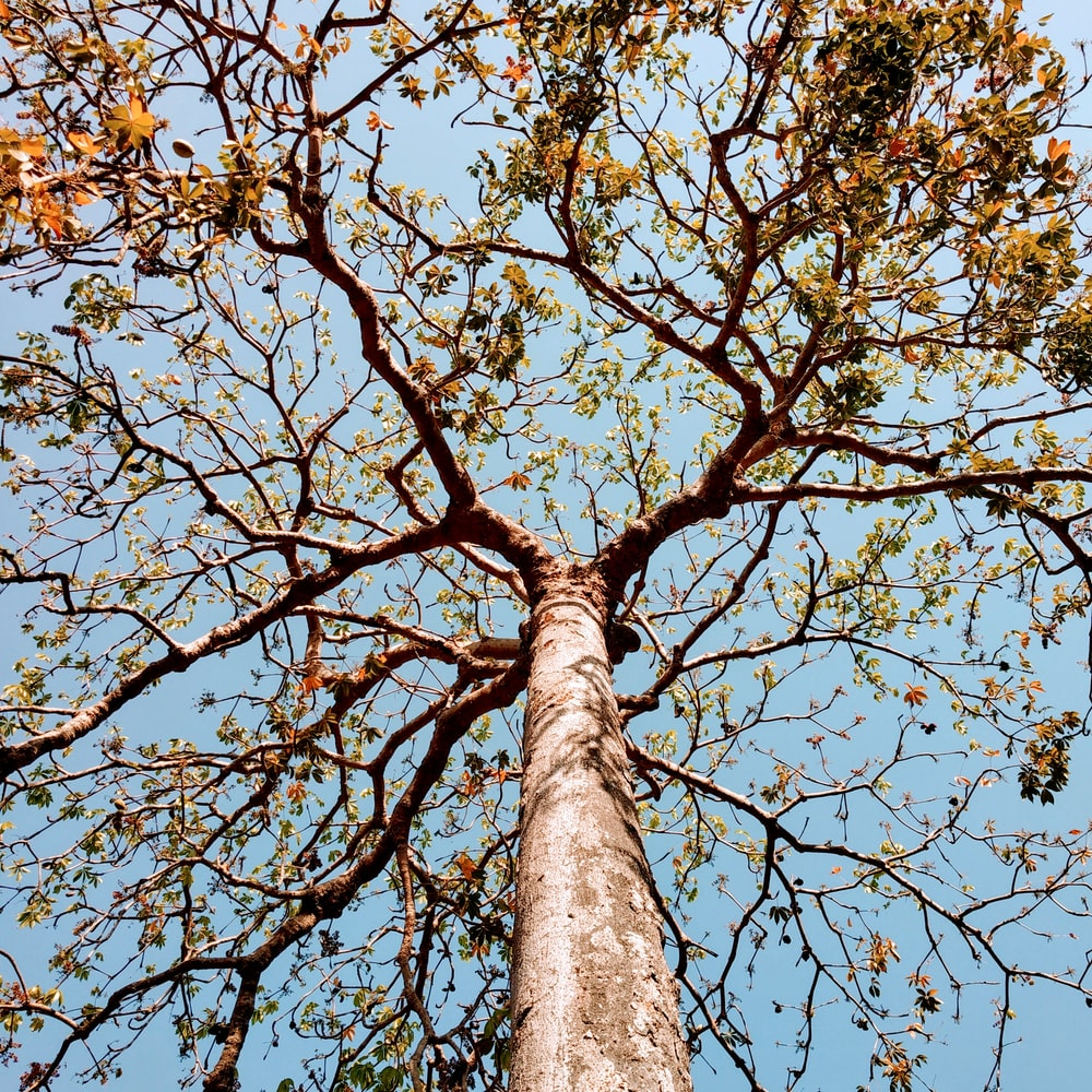 low angle photo of green leafed tree