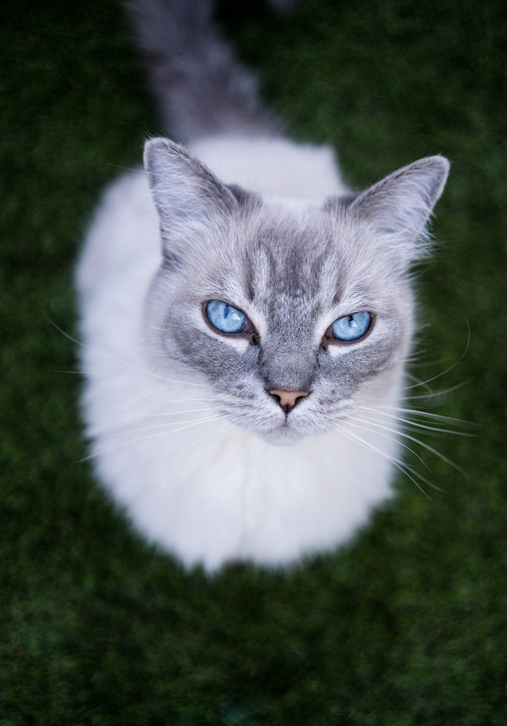 selective-focus photography of white cat