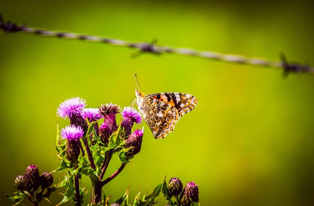 brown butterfly perch on flower
