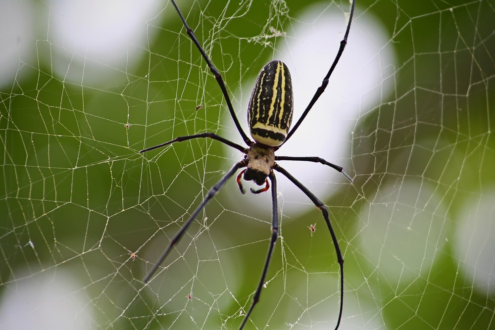 focus photography of beige spider
