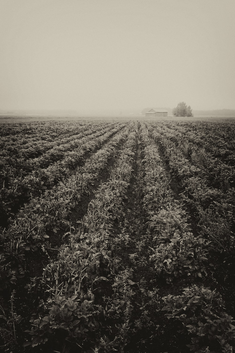 grayscale photo of plants