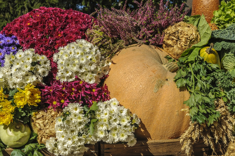 assorted flower and vegetable lot