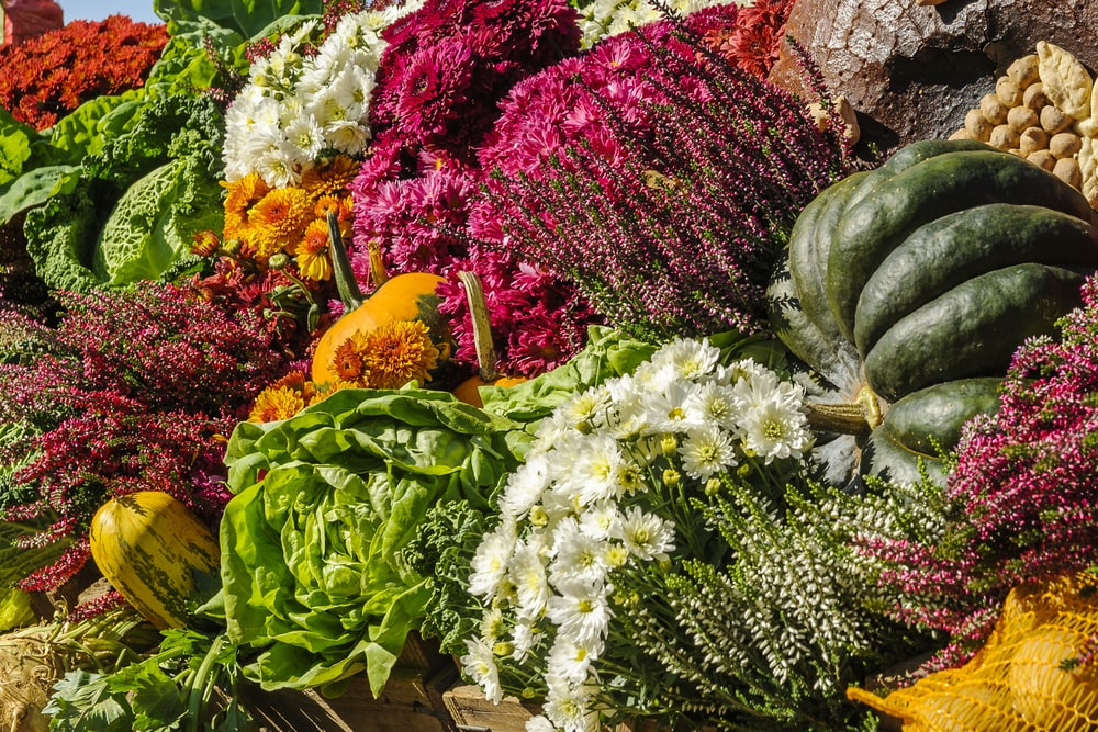 assorted vegetable and flower lot