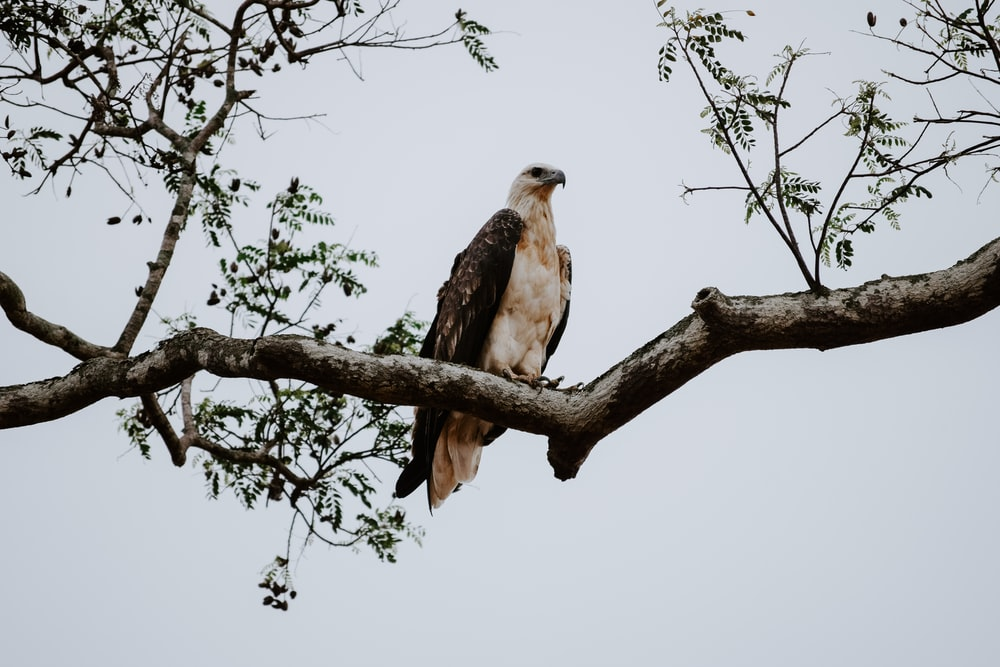 eagle perches on the tree
