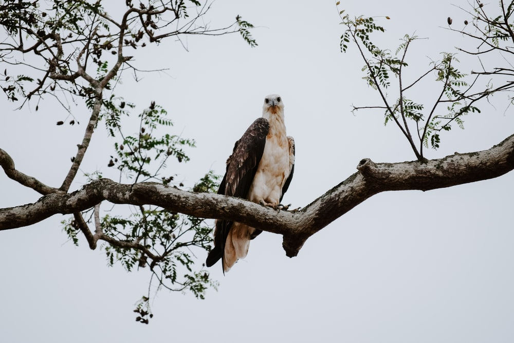 eagle perching on the tree
