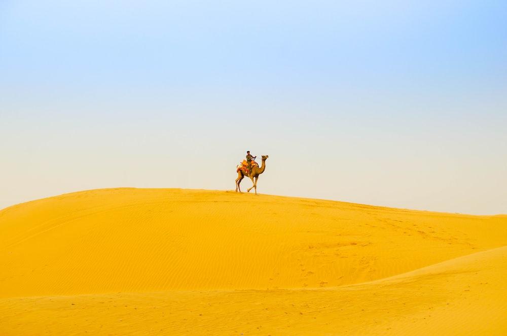 man riding camel on desert