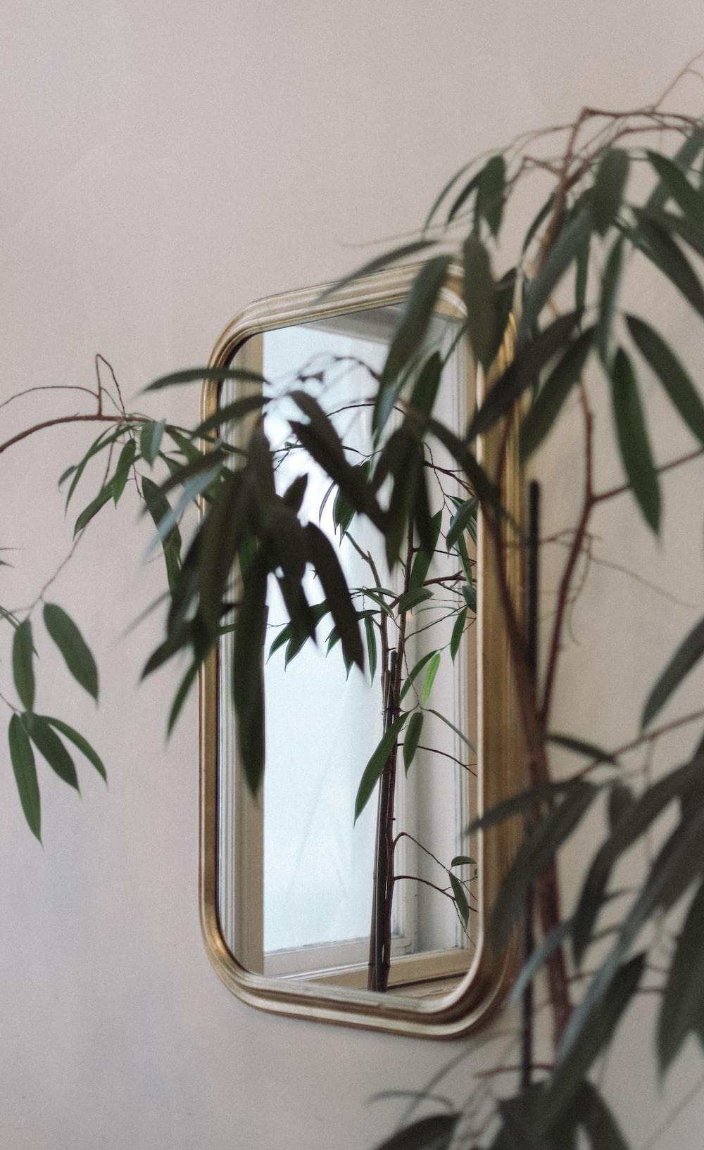 gold framed mirror near plant
