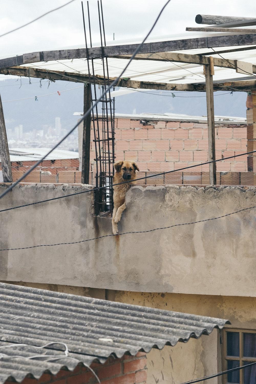 short-coated brown dog near black steel bars