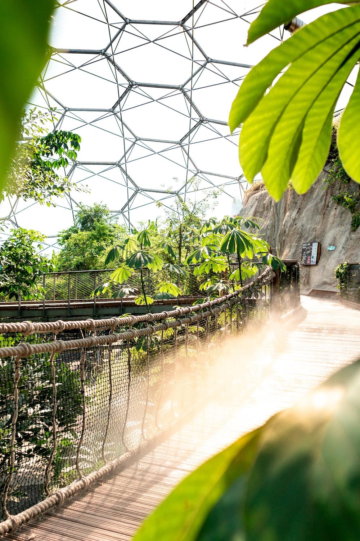 Garden Of Eden Pictures Download Free Images On Unsplash