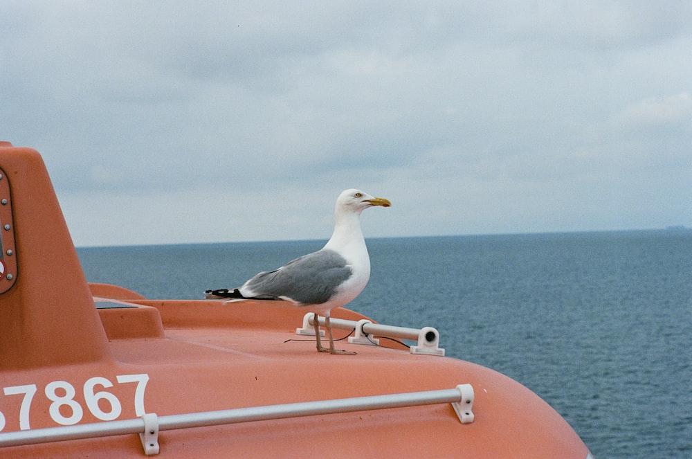 white and grey bird on orange boat