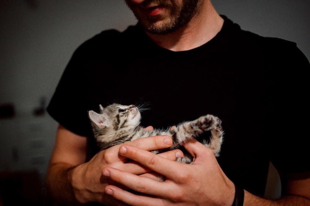 man wearing black shirt carrying gray tabby kitten