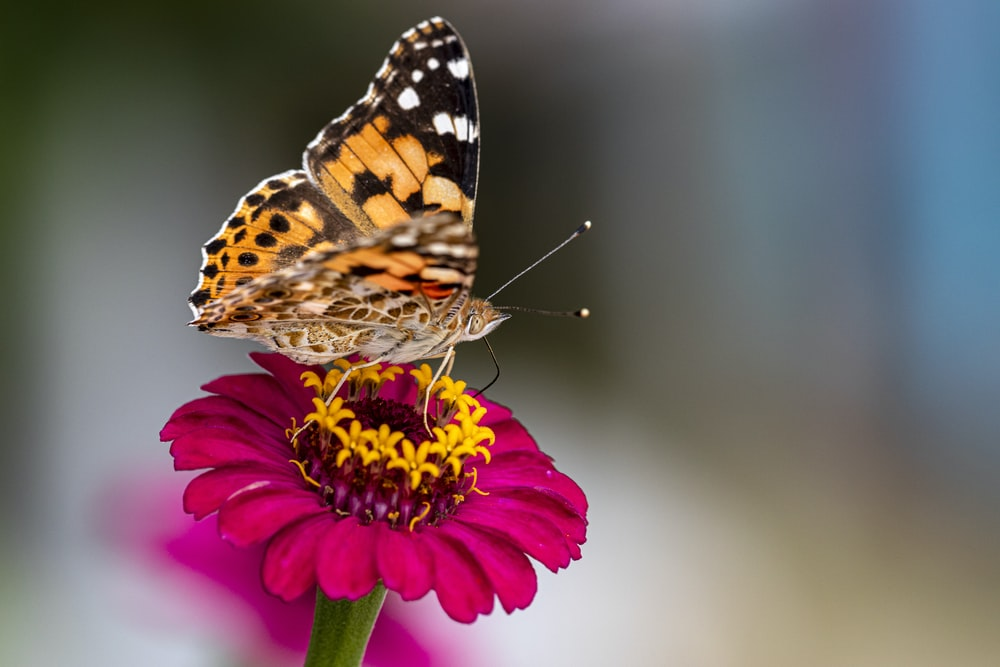 macro photography of a butterfly perching on a flower
