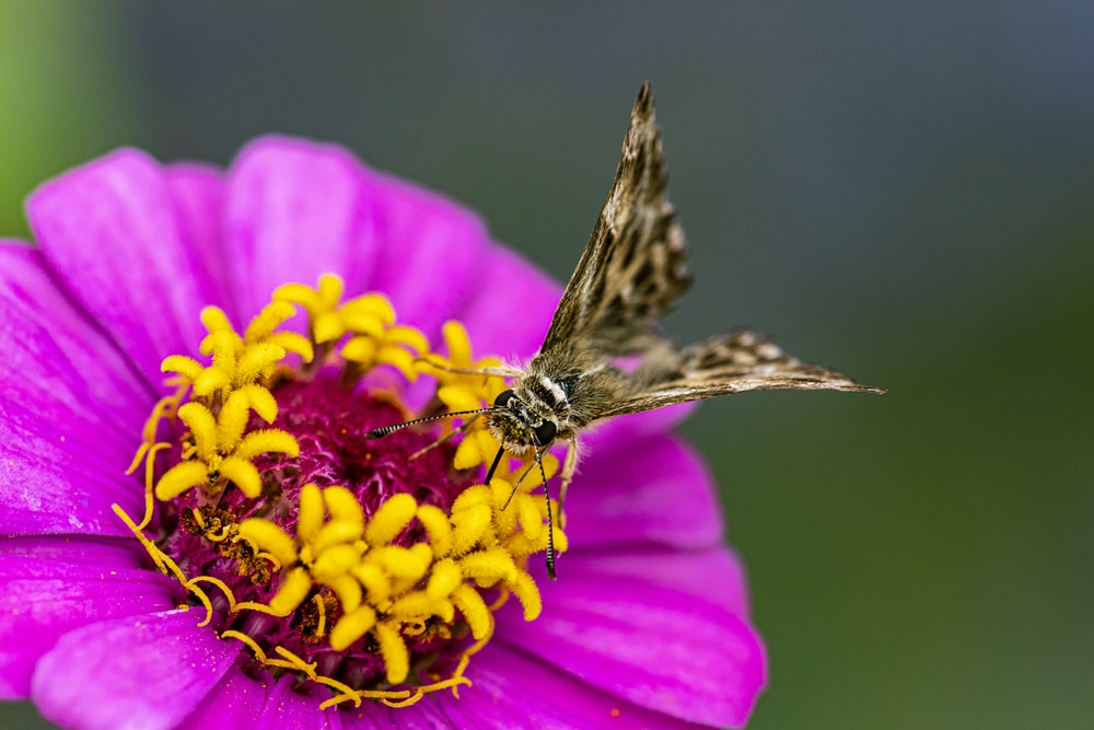 shallow focus photography of brown butterfly on purple and yellow flower