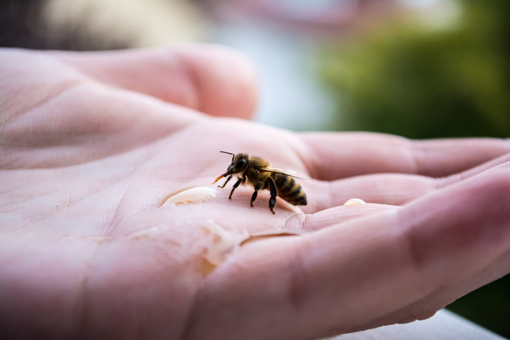 yellow bee on hand