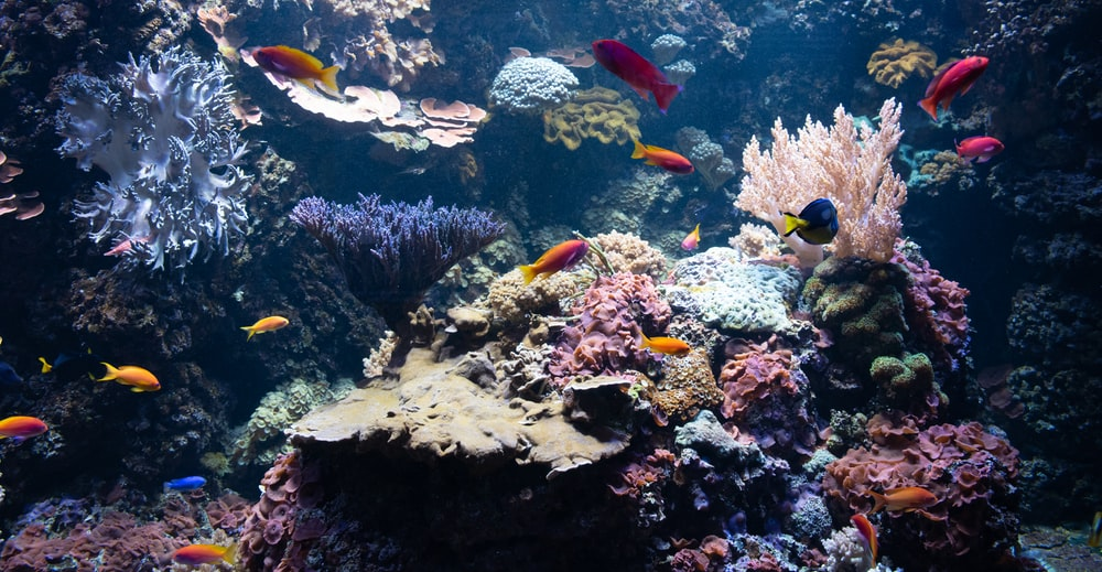 underwater photography of fish and corals
