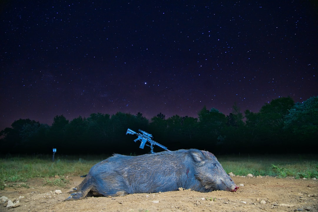 A wild hog taken on a clear and starry night. Hogs are devastating farmers in the south and farmer's are working with hunters to adapt and help stop this invasive species from destroying their crop land.