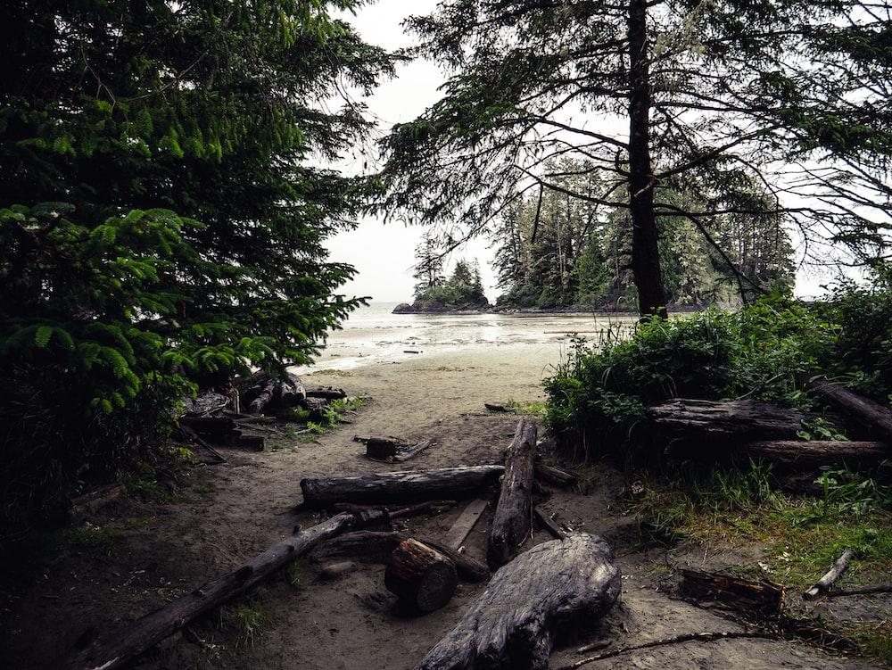 trees near shore