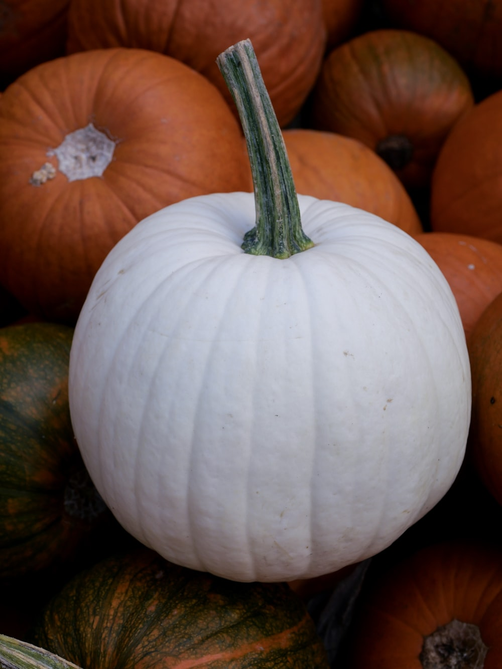 white pumpkin on top of orange pumpkins