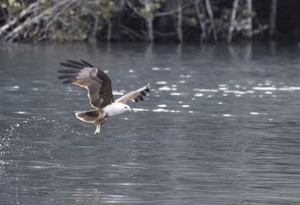 brown eagle above body of water