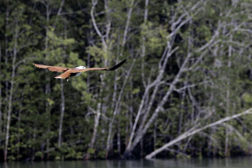 brown bird above calm body of water