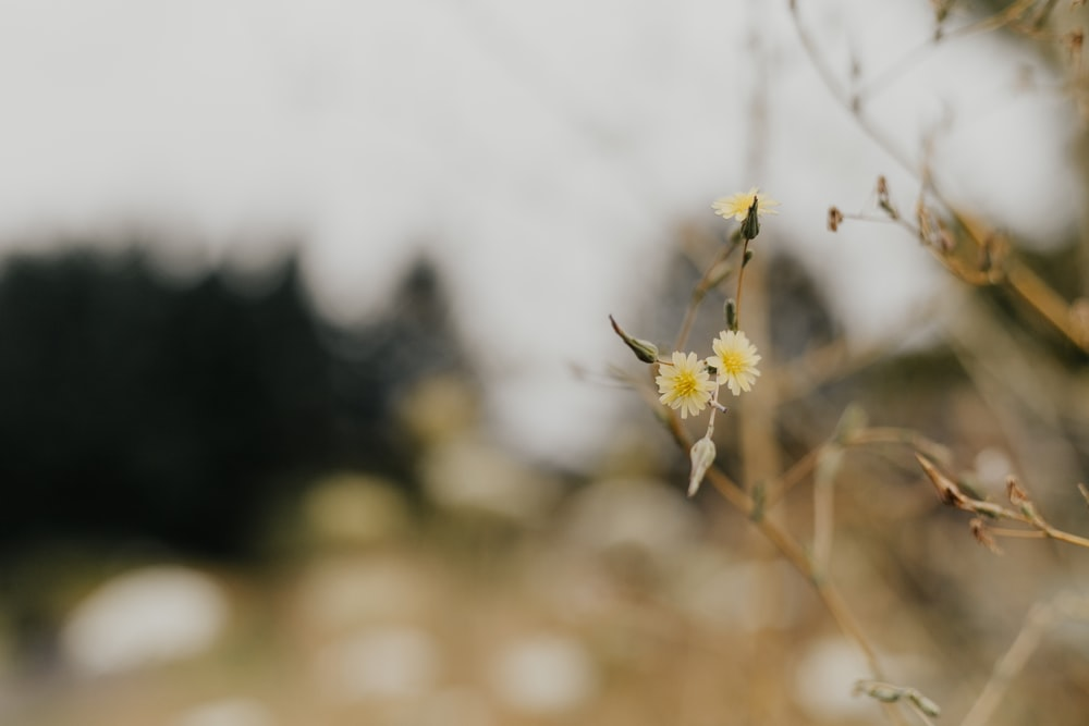 yellow petaled flowers in close-up photo