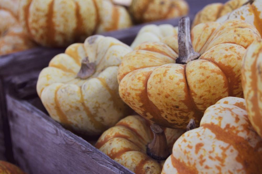 orange patty pan lot