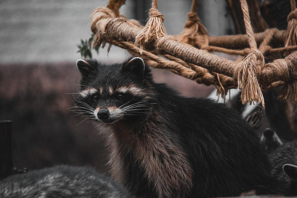 grayscale photo of fox