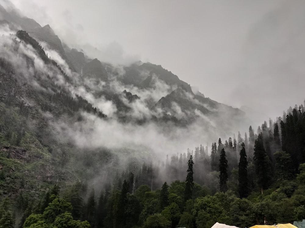 tall trees near mountain