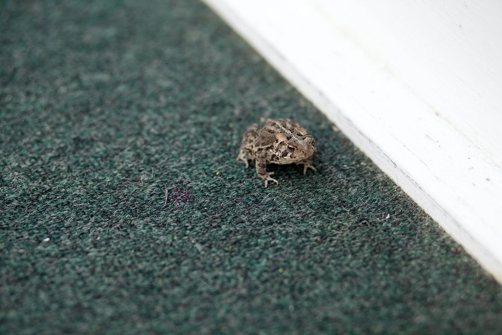 grey frog on grey surface