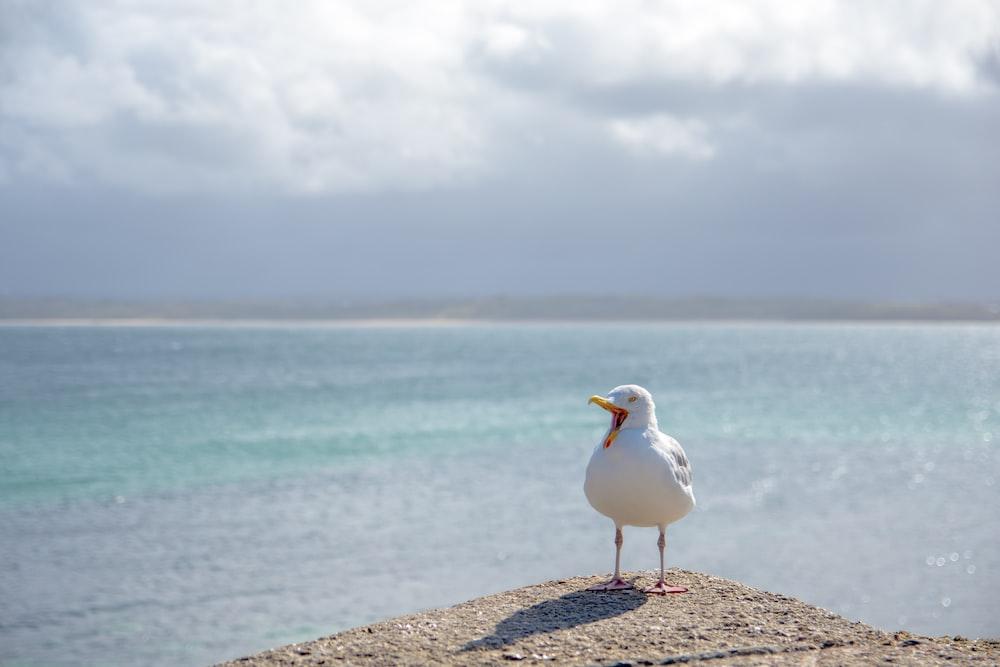 white bird beside sea at daytime