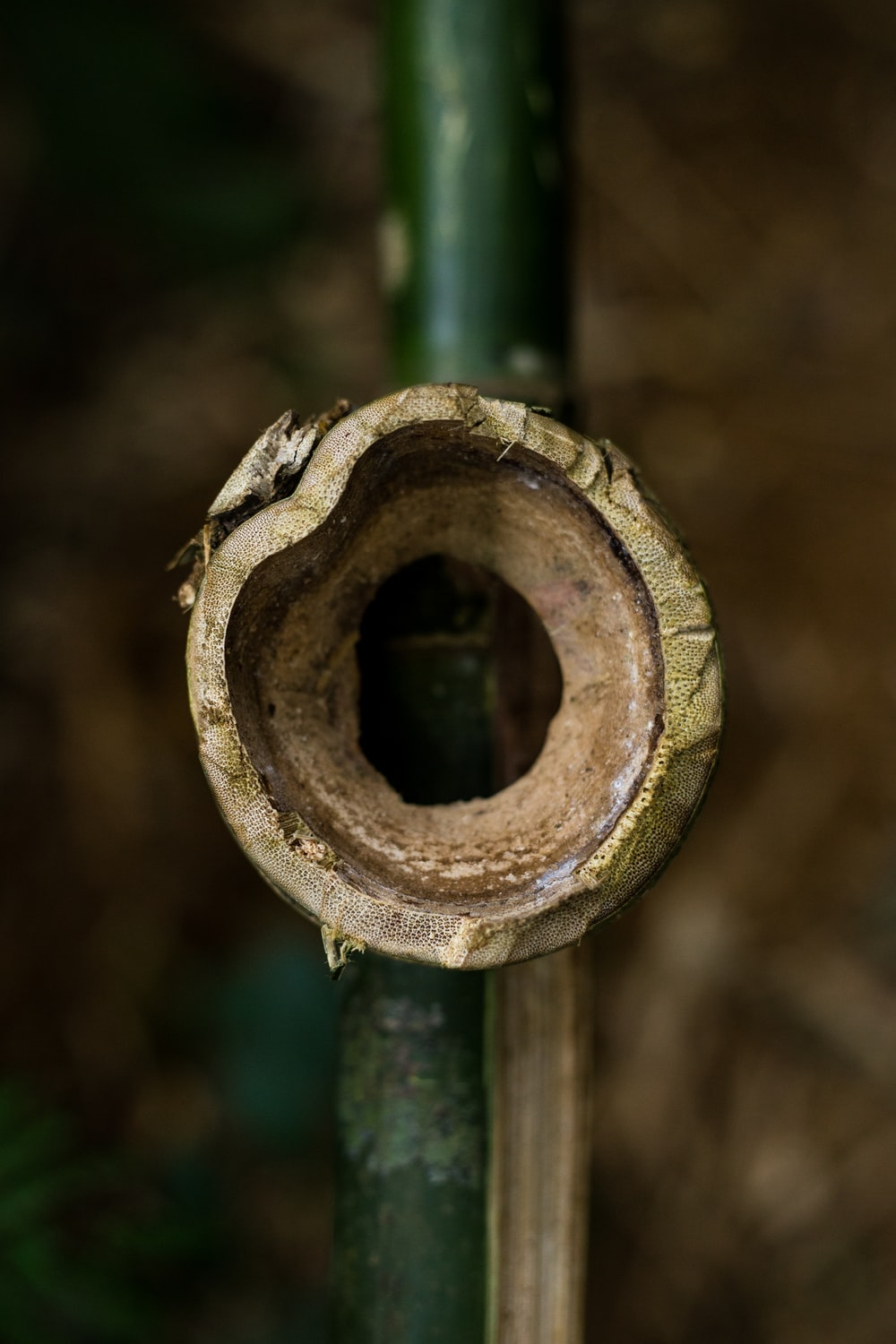 hole from yellow and green bamboo