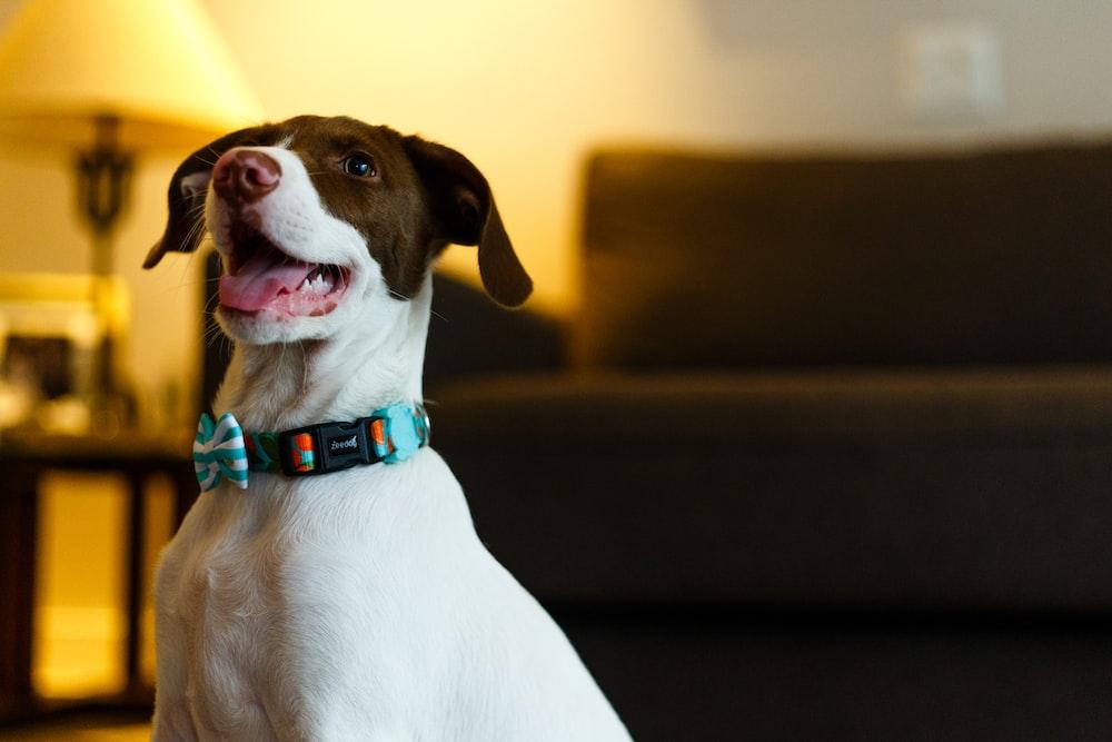shallow focus photo of short-coated white dog