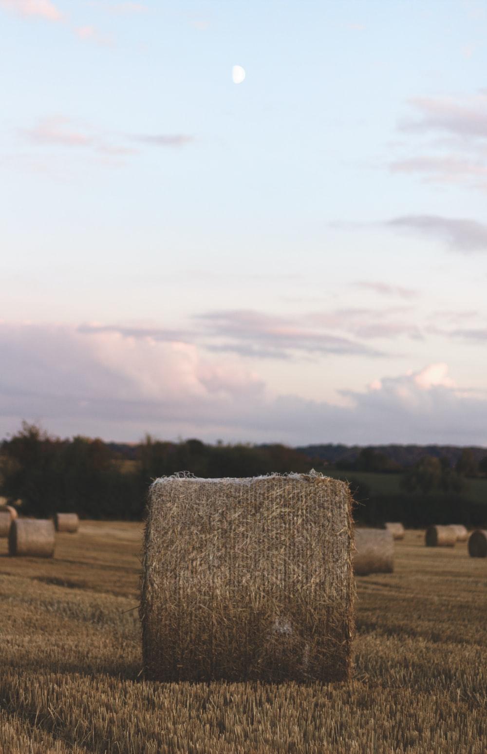 brown hay during daytime
