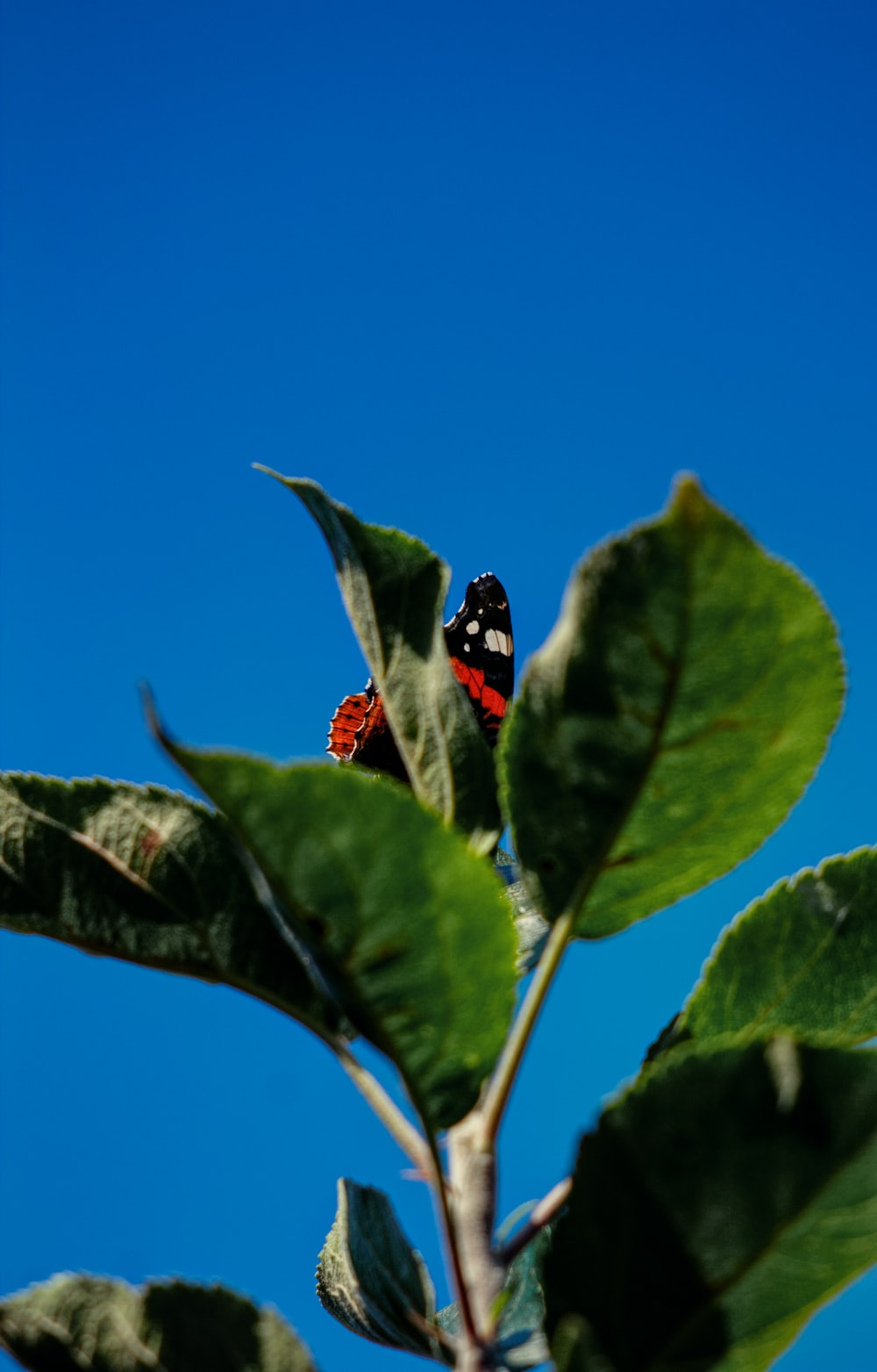 red and black butterfly perching on green leafed plant