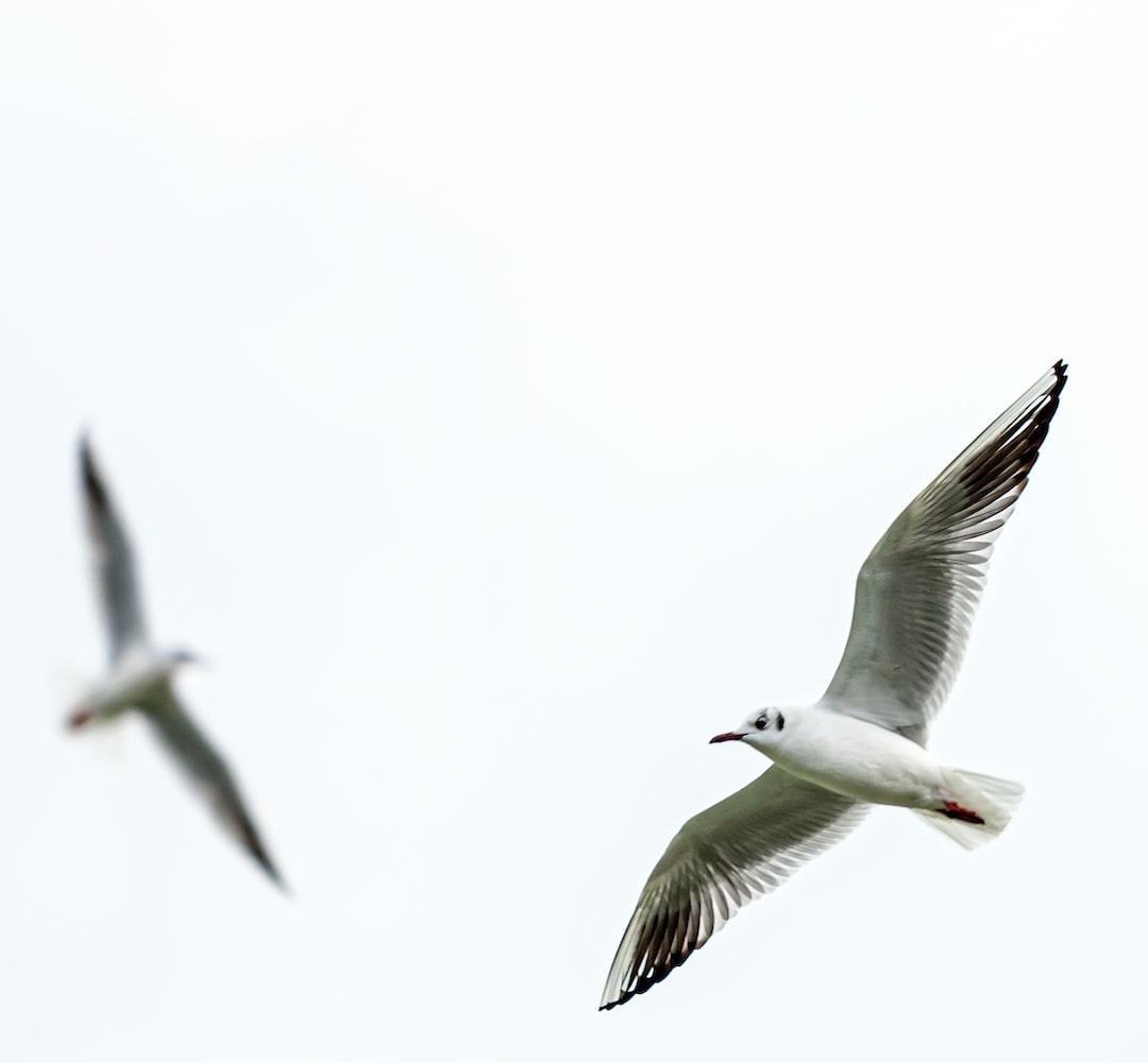 Birds in flight over Bosphorus.  Istanbul, 2005.