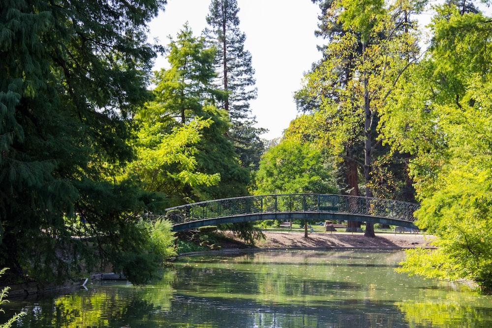 bridge at the park during daytime