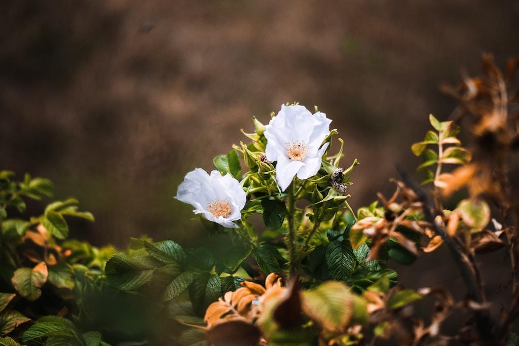white-petaled flower closeup photography