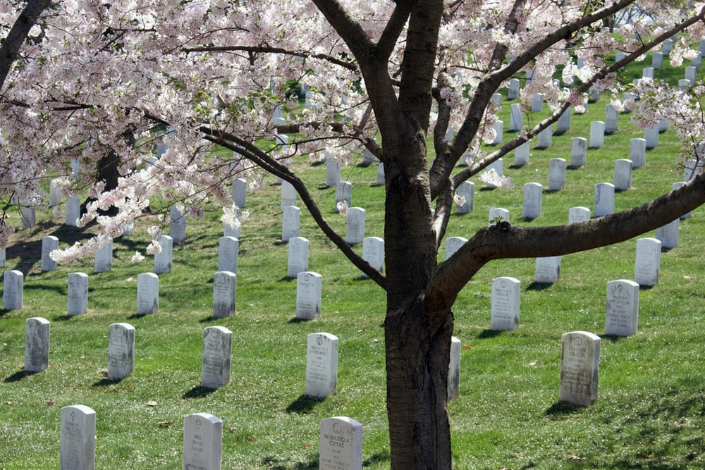 gray tombs at daytime