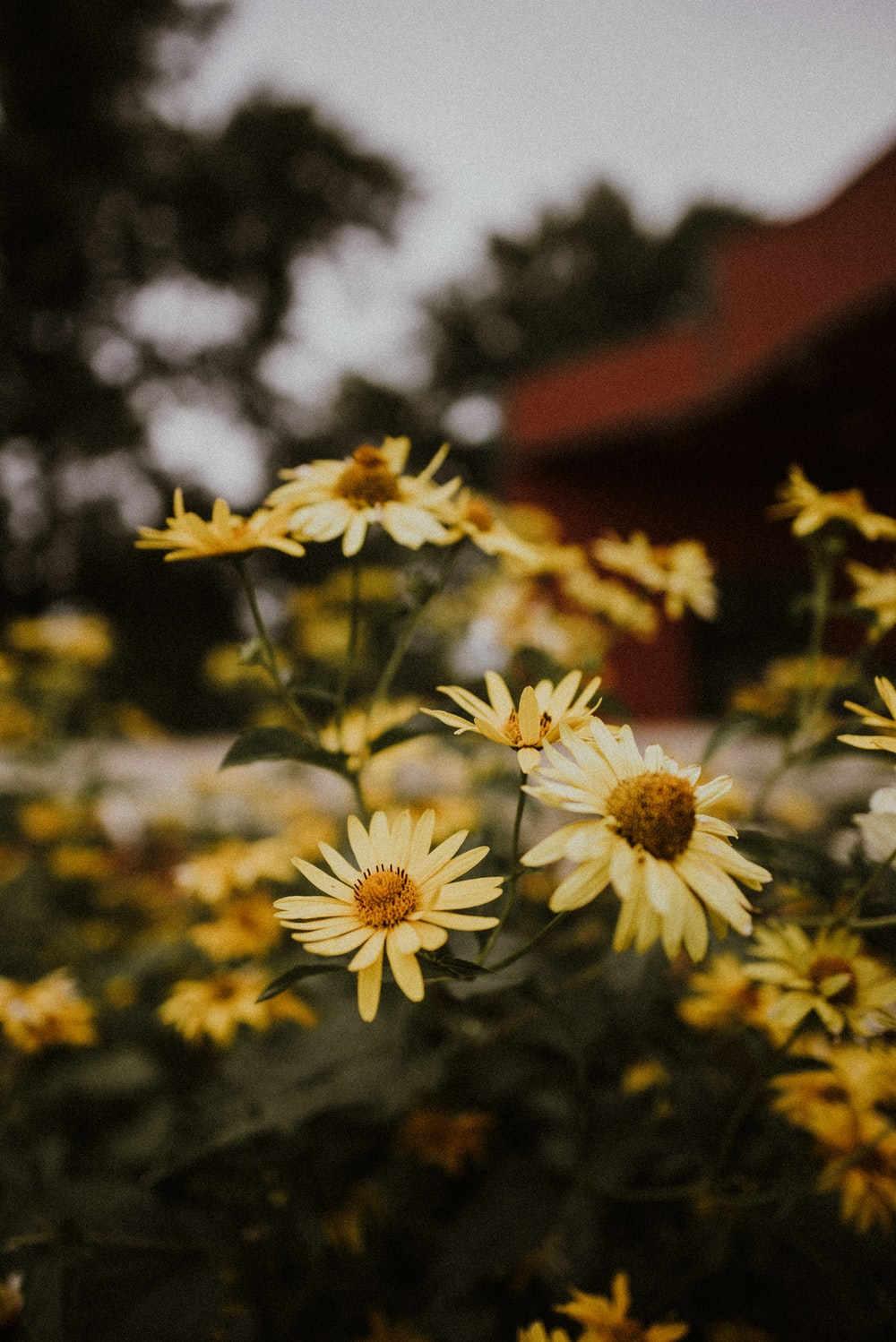 yellow-petaled flowers during daytime