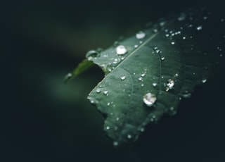 selective focus photography of water dew on leaf