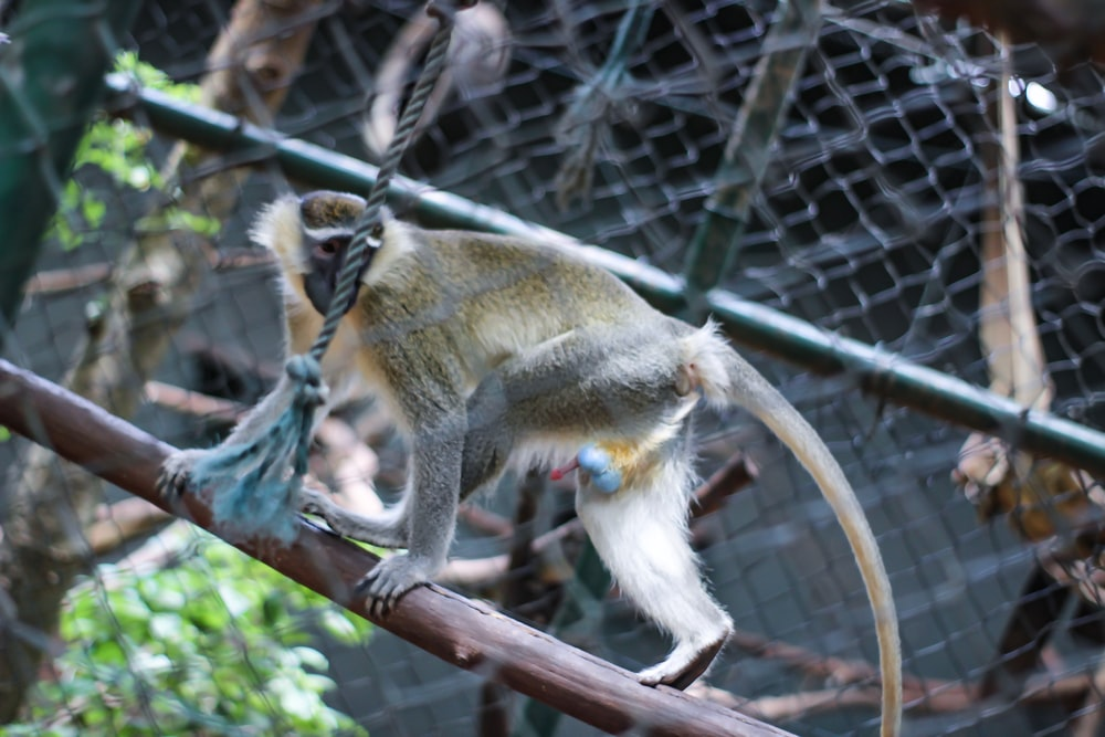 gray and brown monkey on branch