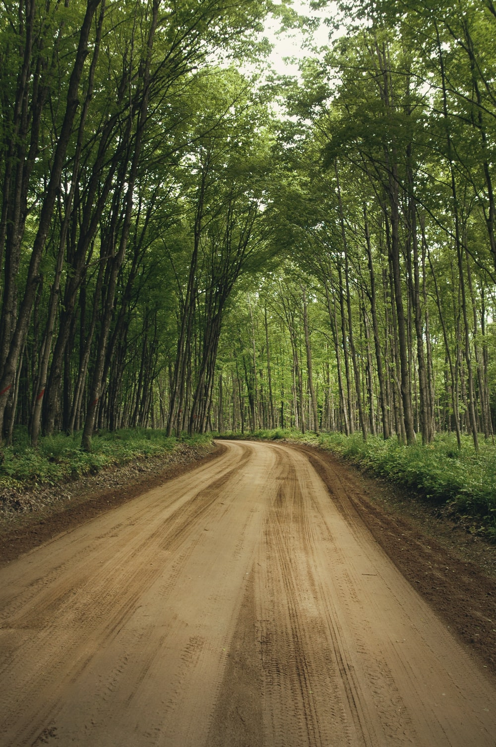 tall green trees beside road