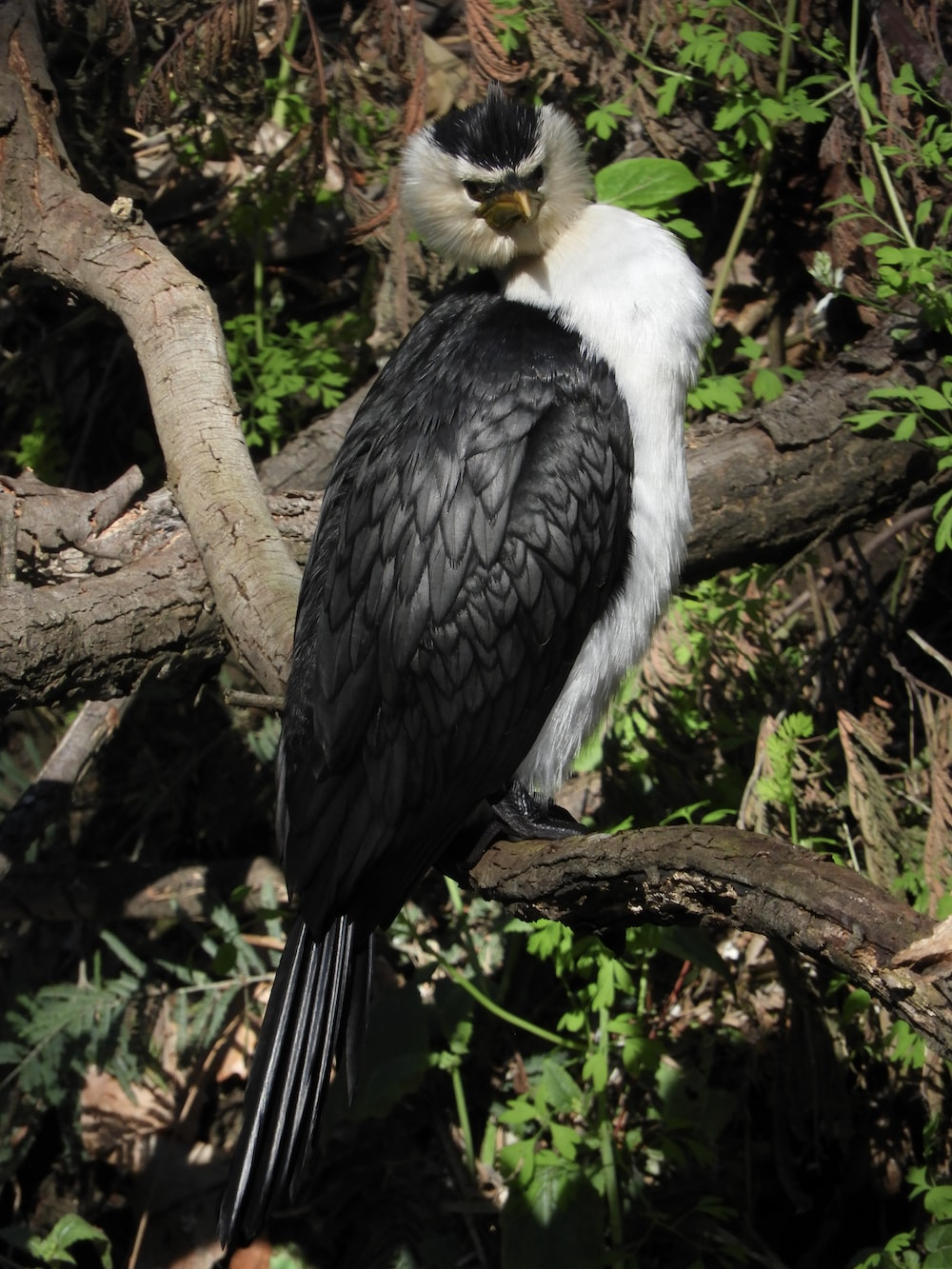 black and white eagle on branch of tree
