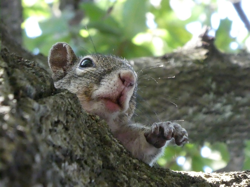 gray rodent on tree
